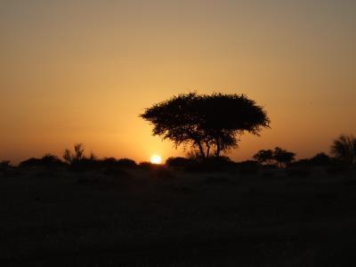 Coucher du soleil arbre 400x300.jpg