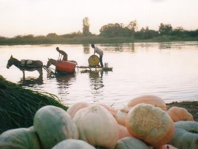 Courge au fleuve 400x300.jpg