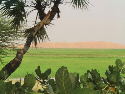 verdure dune 400x300.jpg